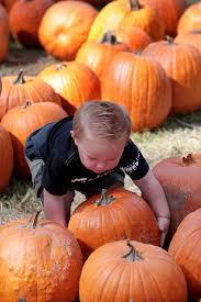 Pumpkin Patches Near Bakersfield Ca by Photo Gallery It U0027s Autumn At Banducci U0027s Family Pumpkin Patch