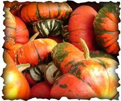 Best Pumpkin Patch Des Moines by Pierce U0027s Pumpkin Patch Home