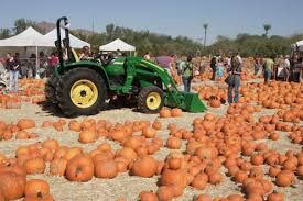 Greenbluff Pumpkin Patch Address by Tag Archive For
