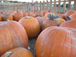 Great Pumpkin Patch Frederick Md by Summers Farm Frederick All You Need To Know Before You Go
