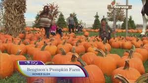 Pumpkin Patch Homer Glen Il by Homer Glen News Abc7chicago Com