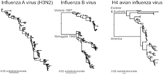 Asymptomatic Viral Shedding Influenza by Discovering The Phylodynamics Of Rna Viruses