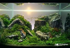 What Is Aquascaping What Is Aquarium Life Appartment Aquascaping ... Awesome Aquascaping Gallery Iiac European Aquascape Channel Aquascapes Homedesignpicturewin Aquascaping Tutorial Aqurios Para Decorao Pinterest Big Tutorial Guide Continuity By James Findley The Indonesia Green Machine Ada Aquarium Acuarios Aquariums Best Of Aquascapes Fabuluxedecor Natural Iwagumi Scottish Grass Size 40x25h Lab Undergrowth Wood Tank 130l Aquadesign