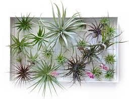 Plants For Bathroom Without Windows by 8 U0027shower Plants U0027 That Want To Live In Your Bathroom Treehugger