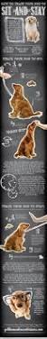Old Westbury Gardens Dog Halloween by All Things Canine Dog Website Of The Week Twilight Bark Uk Dog