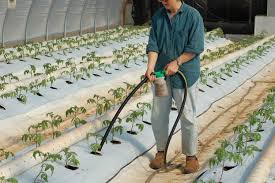 Fertilizer For Pumpkins And Watermelons by Uwharrie Farm