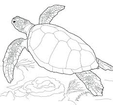 Cute Turtle Coloring Pictures Page Revisited Sea Pages Loggerhead Free Printable