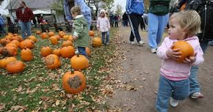 Pumpkin Patch Homer Glen Il by Chicago Area Pumpkin Patches Head To These Spots To Pick The