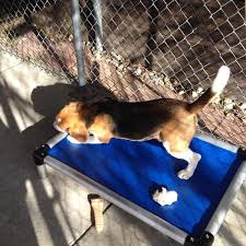 Chew Proof Dog Beds by Chew Proof Dog Beds Kuranda Dog Beds