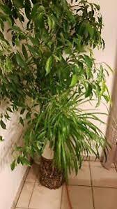 schlafzimmer pflanzen möbel gebraucht kaufen ebay