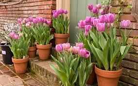garden design garden design with how to plant tulip bulbs in six