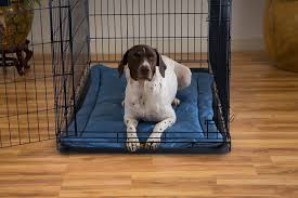 tips comfy chew proof dog bed for comfortable pet bed ideas