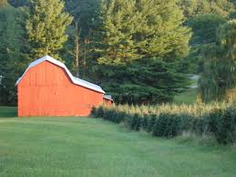Fraser Christmas Tree Farm by Red Barn Christmas Trees Localharvest