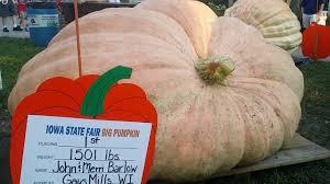 Uc Irvine Pumpkin Patch by Giant Pumpkin Iowa State Fair 2016 Youtube