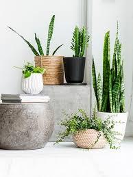Best Bathroom Pot Plants by Best 25 Indoor Plant Pots Ideas On Pinterest Indoor Plant