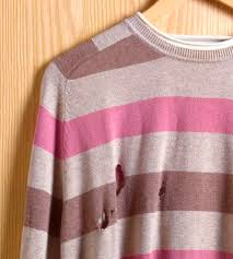 How to Control Clothes Eating Bugs Organically