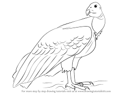 How To Draw A California Condor
