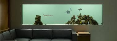 aquarium dans le mur aquariums salle de filtrations viviers commerciaux