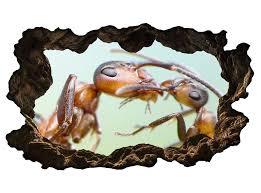 3d wandtattoo ameise mutter insekt ameisen liebe selbstklebend wandbild wandsticker wohnzimmer wand aufkleber 11g451 3dwandtattoo24 de