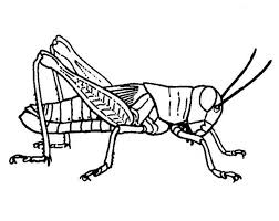 Grasshopper Picture Coloring Page