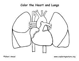 Printable Human Anatomy Coloring Pages