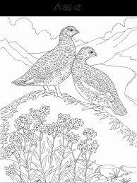 Hard Flower Coloring Pages Birds