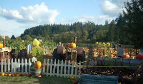 North Plains Pumpkin Patch by Pumpkin Patch Portland Hillsboro Forest Grove Banks Seaside