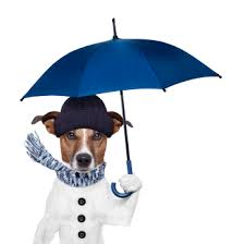 My Dog Pees On My Bed by 10 Tips Getting Your Dog To U0027potty U0027 Outside In The Rain