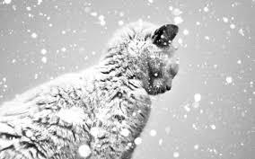 snow cat snow cat xzon