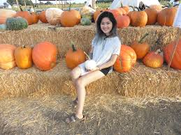 Pumpkin Patch Dixon Ca by Cool Patch Pumpkins U2013 Phuong Tran