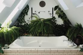 clean in green perfekte pflanzen fürs bad florismart