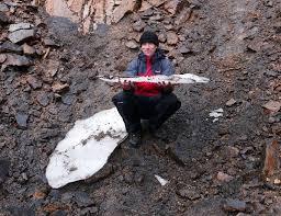 Longest Lasting Christmas Tree Uk by Uk U0027s Longest Lasting Patch Of Snow Melts Away Bbc News