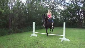 Becca And Gem Backyard Horse Jumping - YouTube Tennessee Weather Sleipnir Morgan Horse Farm Blog Build Compost Pile And Spread Manure Little Backyard World In My Life Of Lisa Laporte Electric Tape Fence Home Gardens Geek Becca Gem Backyard Horse Jumping Youtube Free Images Fence Animal Wall Shed Paint What Exactly Is A Roan Expert Advice On Care Order Blind Lonely Getting Older California Finds New Friend Sculpture Patricia Borum Cqright Otographs The Assembled 14 Camp Expo Pics Catskill Arabian Horses Texas Ranch Sullivan