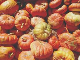 Pumpkin Patch Restaurant Houston Tx by Vacation Days New Braunfels October 2015 Adventures In A New