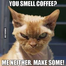 cat coffee you smell coffee me neither make some humoar