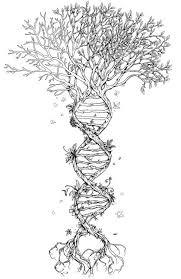 Drawn Tree Transparent 10