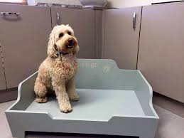 Petco Pet Beds by Raised Pet Beds For Dogs 10 Dog Beds U2013 Gallery Images And Wallpapers