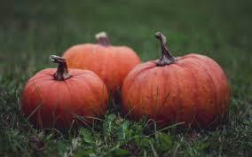 Pumpkin For Pets Diarrhea by Superfoods For Pets Pumpkin Petnet