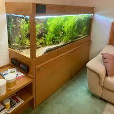 komplettes aquarium mit umfangreichem zubehör