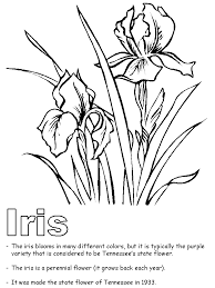 Tennessee State Flower Iris Coloring Page