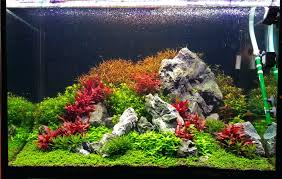 Aquascaping Forum – Homedesignpicture.win 329 Best Aquascape Images On Pinterest Aquarium Ideas Floratic Visiting Paradise At Shah Alam Planted Aquarium Aquascape Things Aquariums Aquascaping Malaysia Diy Pertama Kali Aquascaping October 2010 Of The Month Ikebana Aquascaping World Sumida Aquarium Reloaded Fish Tanks And Designs Awesome A Moss Experiment Its All About Current Low Tech Tank Cuisine Wonderful Small Cubical Styles Planted The Surreal Submarine Amuse