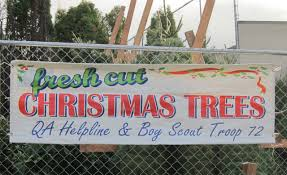 West Seattle Christmas Tree Disposal by Queen Anne View