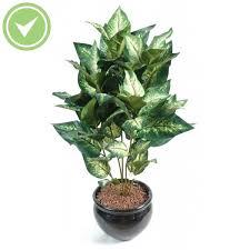 plantes vertes d interieur grosse plante verte support plante verte maison retraite chfleuri