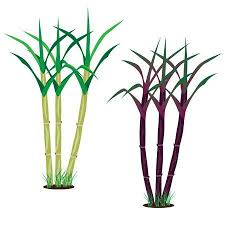 1292 Sugarcane Cliparts Stock Vector And Royalty Free