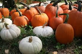 Pumpkin Picking In Ct by 5 Favorite Pumpkin Patches For Pumpkin Picking In Ri