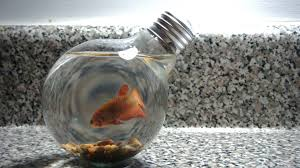 goldfish tag wallpapers fish underwater goldfish wallpaper