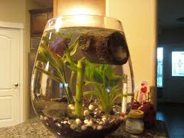 Cloudy Water From Sink by My Water In My Tank Keeps Getting Cloudy I Have A Betta Fis