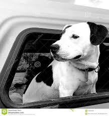Dog,truck,window Stock Photo. Image Of White, Window - 108856550 Truck Dog Hire By Brancatella Brisbane Trailers Allquip Water Trucks Good Dogs Food Sits For Heights Brick Mortar Eater Houston The Public Houses Acvities Of In Aldgate E1 1lx Union Dog Onsite Old Bust Head Filetip Truck And Quad Dog Trailerjpg Wikimedia Commons Animal Transport Solution With Ramp For Diy Storage Part 1 Poting Yard Bojeremyeatonco Driving A Behind The Steering Wheel Of Lorry Stock My Adventures Racing Sled 44 Toyota Daily Richmond Sand Gravel Landscaping