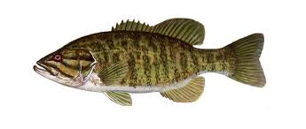 Small Mouth Fish Clipart