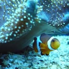 aquarium geant a visiter belgique nausicaä 39 photos 57 avis aquarium bd sainte beuve